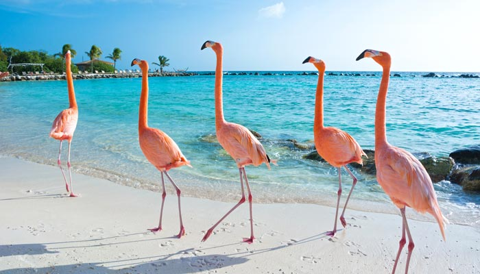 Aruba 2019