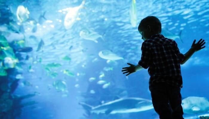 bezienswaardigheden hurghada grand aquarium