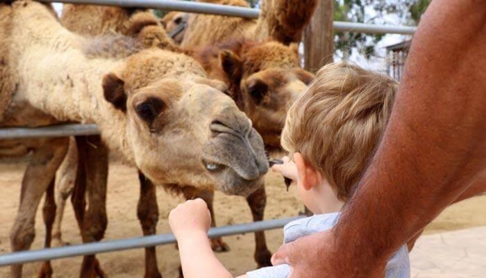 bezienswaardigheden en tips cyprus kamelenpark mazotos