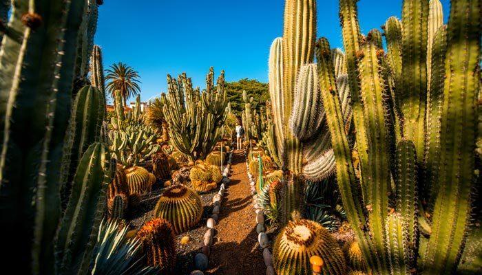 bezienswaardigheden gran canaria botanische tuin