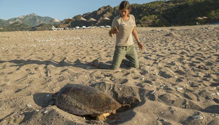 mooiste stranden van turkije iztuzu strand schildpadden strand turkije