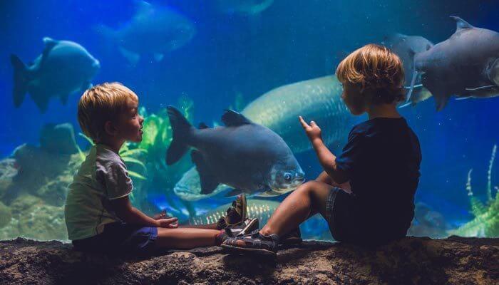 bezienswaardigheden mallorca palma aquarium