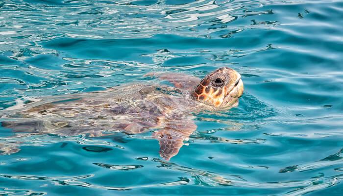 Wat te doen op Zakynthos - Schildpadden spotten
