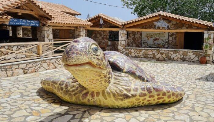 Zante Turtle Center